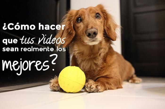 Perro-Feliz-videos-mejores